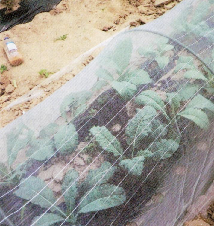 HB-101で無農薬栽培、無肥料栽培をしています。