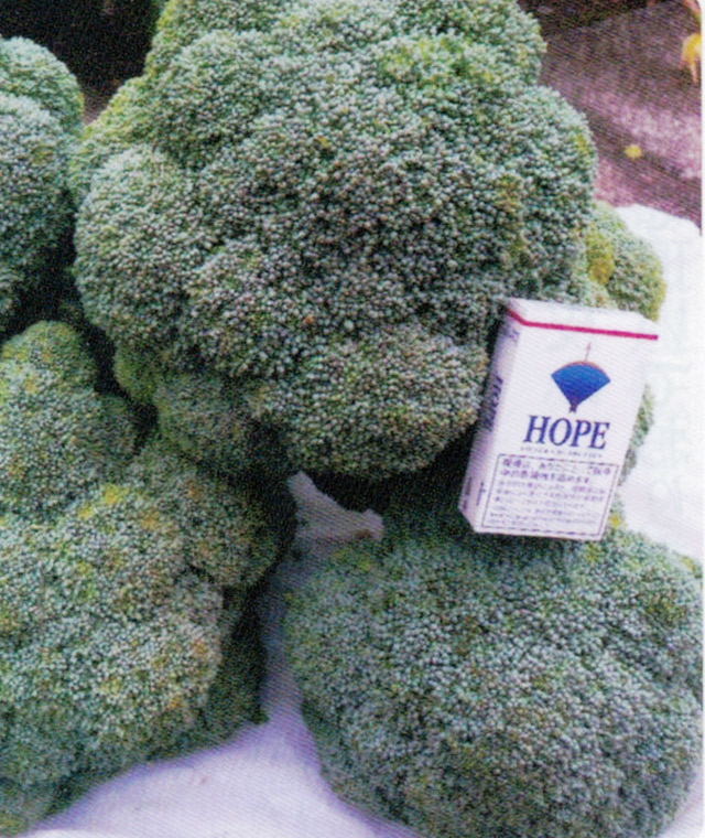 HB-101を使って1.5kgのブロッコリーが収穫出来ました。