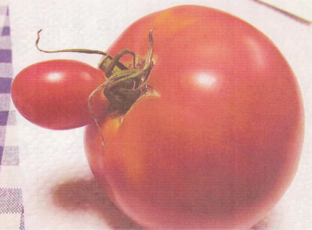 HB-101を使うとトマト、キューリは色も形も良くなります。1つだけ不思議なトマトが出来ました。