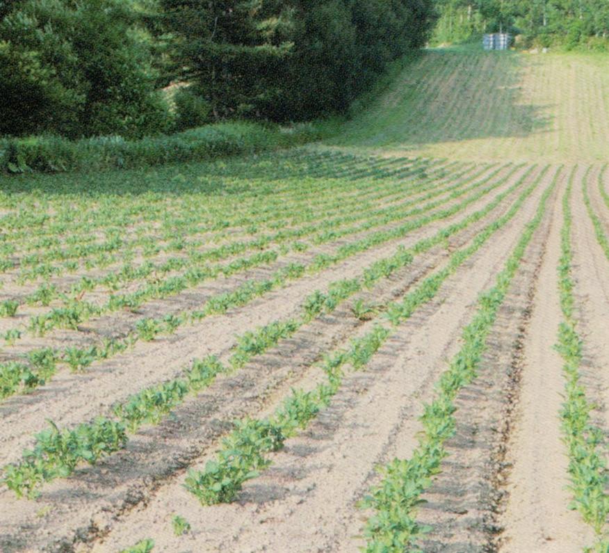 HB-101でじゃがいもの知床じゃがを栽培しています。