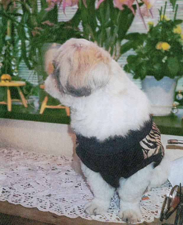 HB-101で元気な犬です。主人の散歩用に求めたシー・ズー犬です。