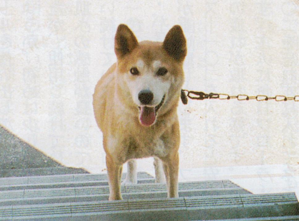 愛犬のユウが元気だったころの写真です。ニャンケンポンとHB-101で便秘することなく、体調も良く、最後まで生きることができました。
