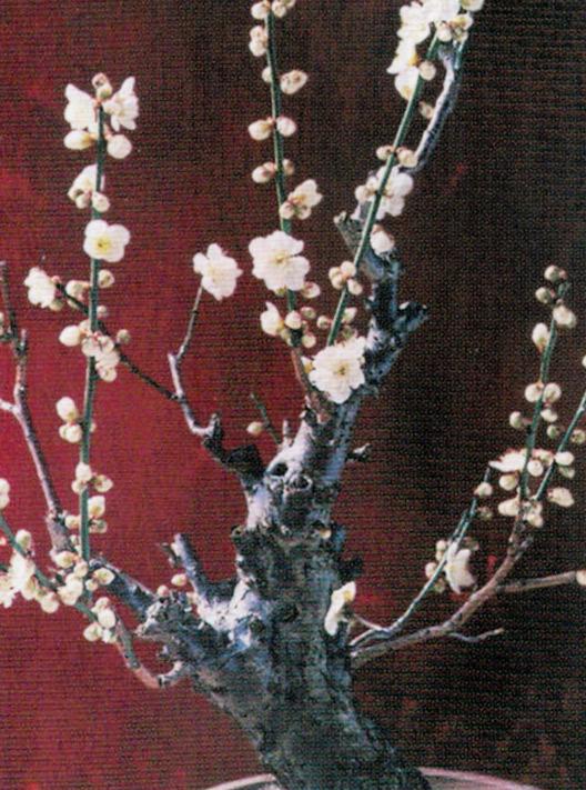 HB-101と顆粒HB-101で花が元気良く咲き始め、花が大きくなります。