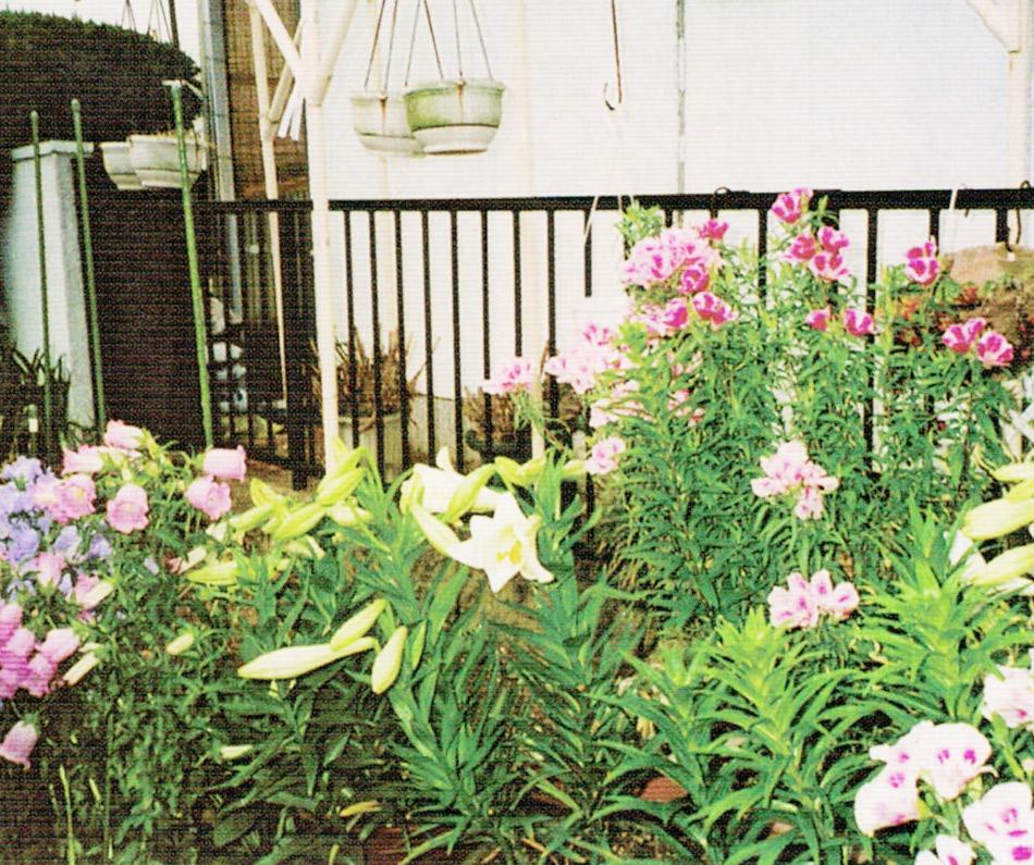 HB-101できれいな花が咲きます。