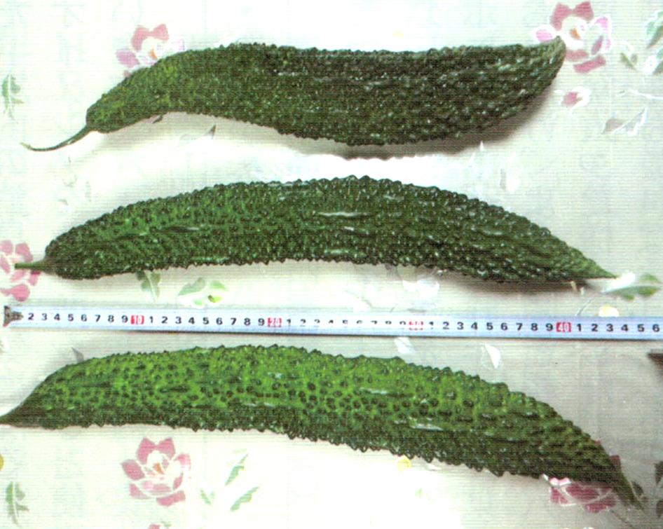 HB-101でゴーヤは40本収穫でき、大きさが40cmを超えたものは4本収穫できました。