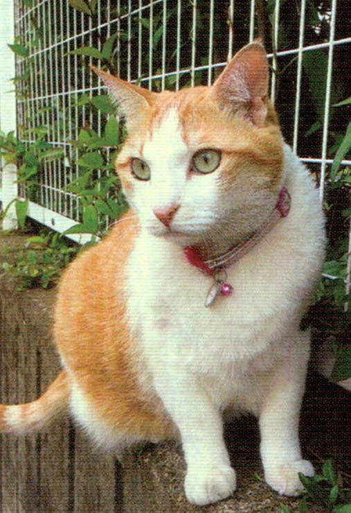 猫のさくらはHB-101でとても元気です。