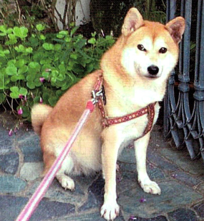 HB-101のおかげで愛犬の愛ちゃんは毛並みが良いと褒められます。