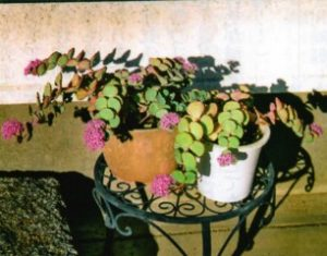 HB廣報,平成29年12月号,フローラ,野菜作り,園芸,農業,家庭菜園,ガーデニング,週末農業,野菜,果実,花,プロ御用達,hb101,植物活力,植物活力液,液肥,植物活力剤,送料無料