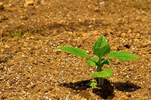 HB廣報,フローラ,天然由来成分,植物エキス,植物のちから,HB-101,hb101,ハッピーバイオ,バイオ技術で明日を創る,植物活力,三重,四日市市,送料無料
