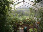 HB廣報,フローラ,天然由来成分,植物エキス,植物のちから,HB101,hb101,ハッピーバイオ,バイオ技術で明日を創る,植物活力,三重,四日市市,送料無料