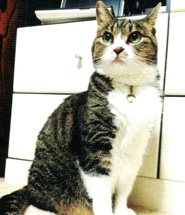 ニャンケンポンとHB-101で元気な猫