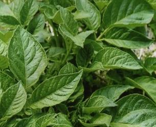 HB廣報,フローラ,植物のちから,HB101,植物バイオ,