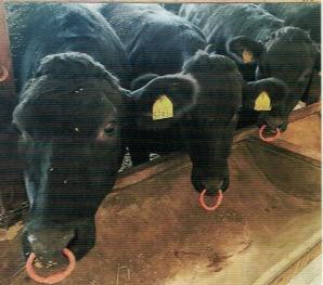 ニオイワンダフルで糞の悪臭を抑制