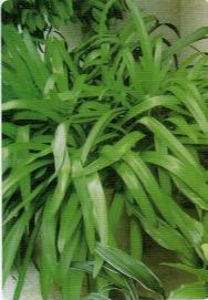 HB-101と顆粒HB-101で植物がよく育つ