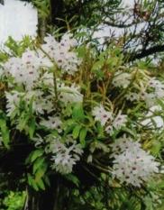 HB廣報,フローラ,植物のちから,HB101,