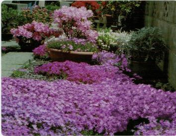 HB-101で綺麗に咲いた花々