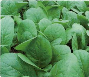 HB-101で美味しくて日持ちの良い作物が収穫できる