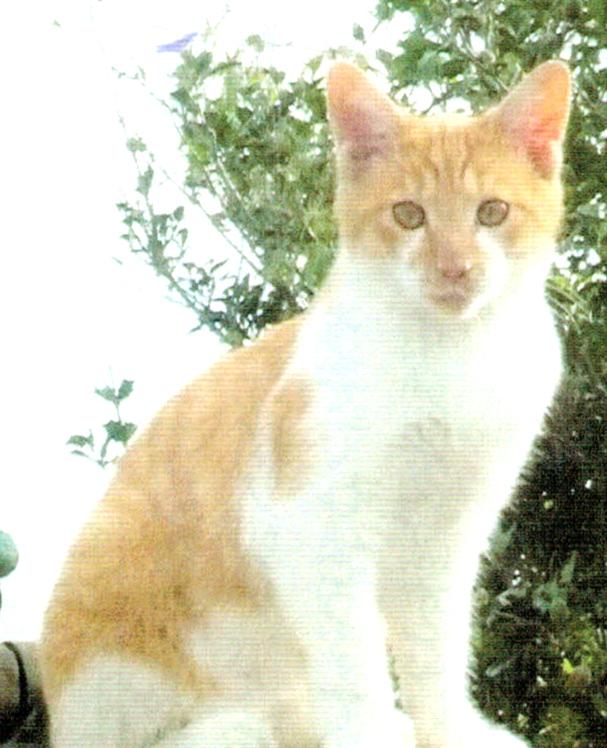 ニャンケンポンで愛猫のマッキーが元気に育っている
