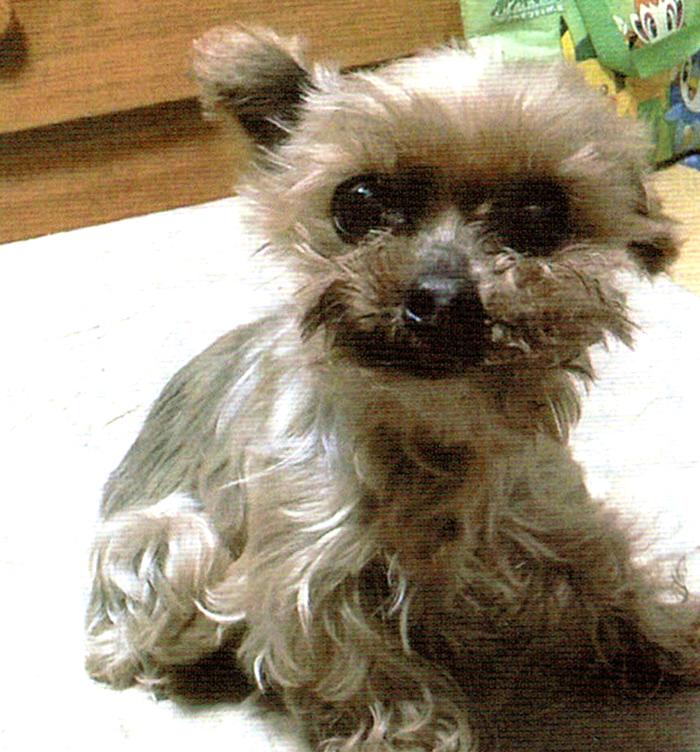 HB-101で犬は病気知らずで、毛艶が良い