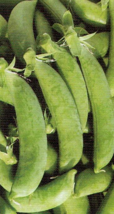 HB-101で栽培したスナップエンドウはガクがきれいでサヤの緑も美しい