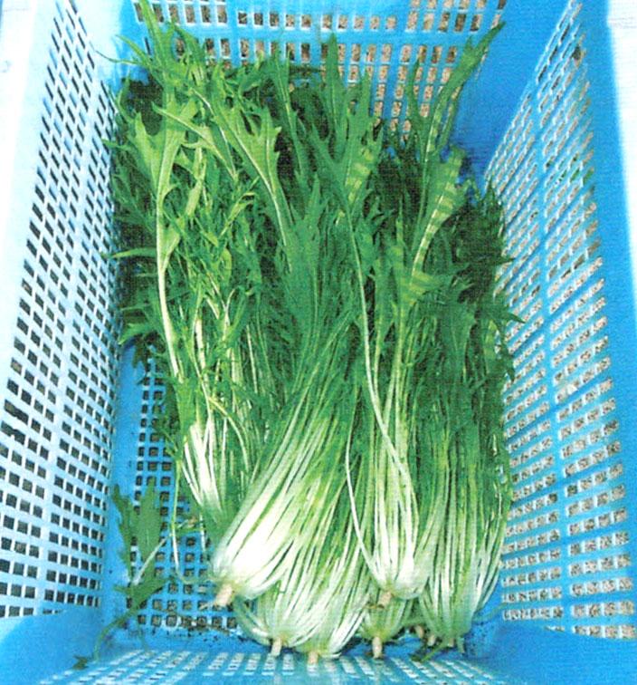 HB-101で野菜の鮮度が抜群に良くなる