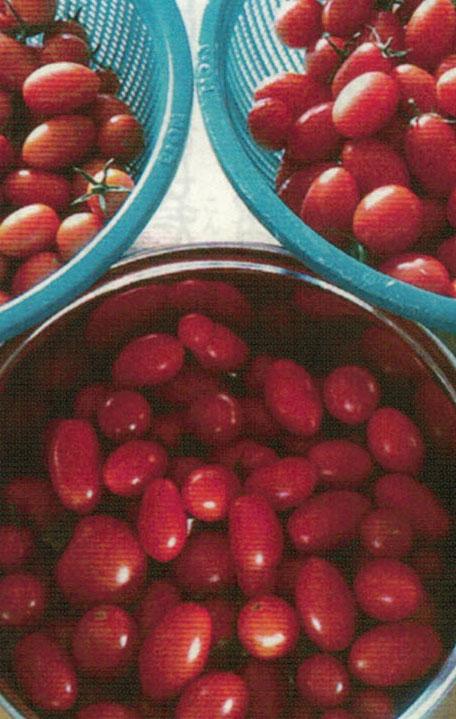HB-101で1回の収穫で200個以上のミニトマトが取れる