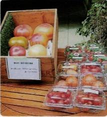 エアルーム・トマトがHB-101で毎年、種子から元気に育つ