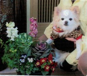HB-101できれいに咲いた花と、HB-101で元気な犬