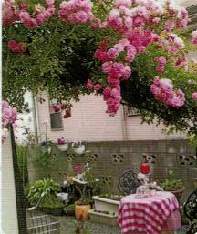 HB-101でバラが美しく咲いている