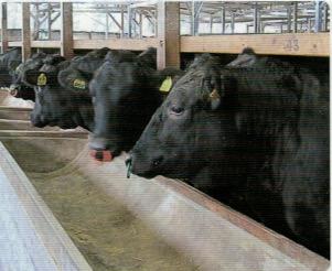牛はニオイワンダフルで健康的