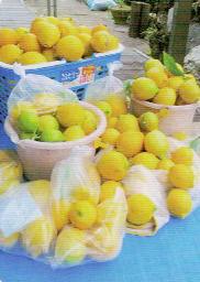 HB-101で200個以上のレモンがとれる