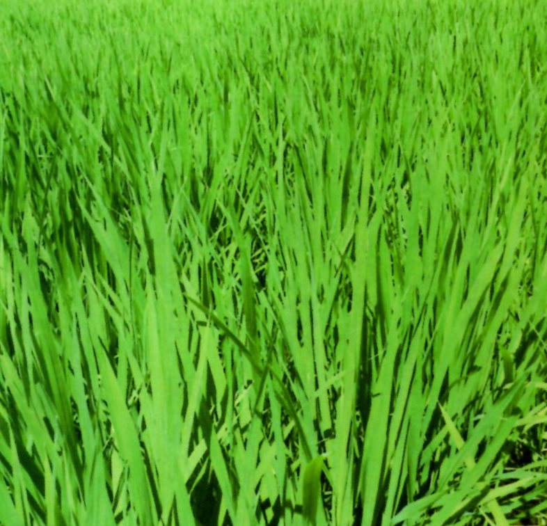 HB廣報,平成30年9月,フローラ,植物のちから,HB101,植物バイオ,