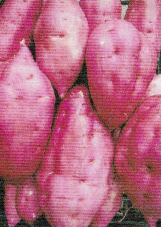 HB-101で、美味できれいなサツマイモの収穫が出来ました。