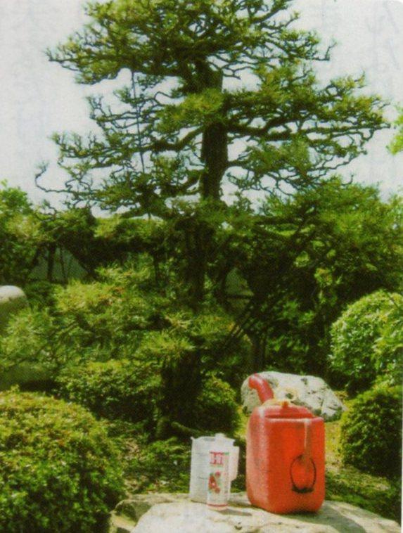 HB廣報,平成30年10月,フローラ,植物のちから,HB101,植物バイオ,