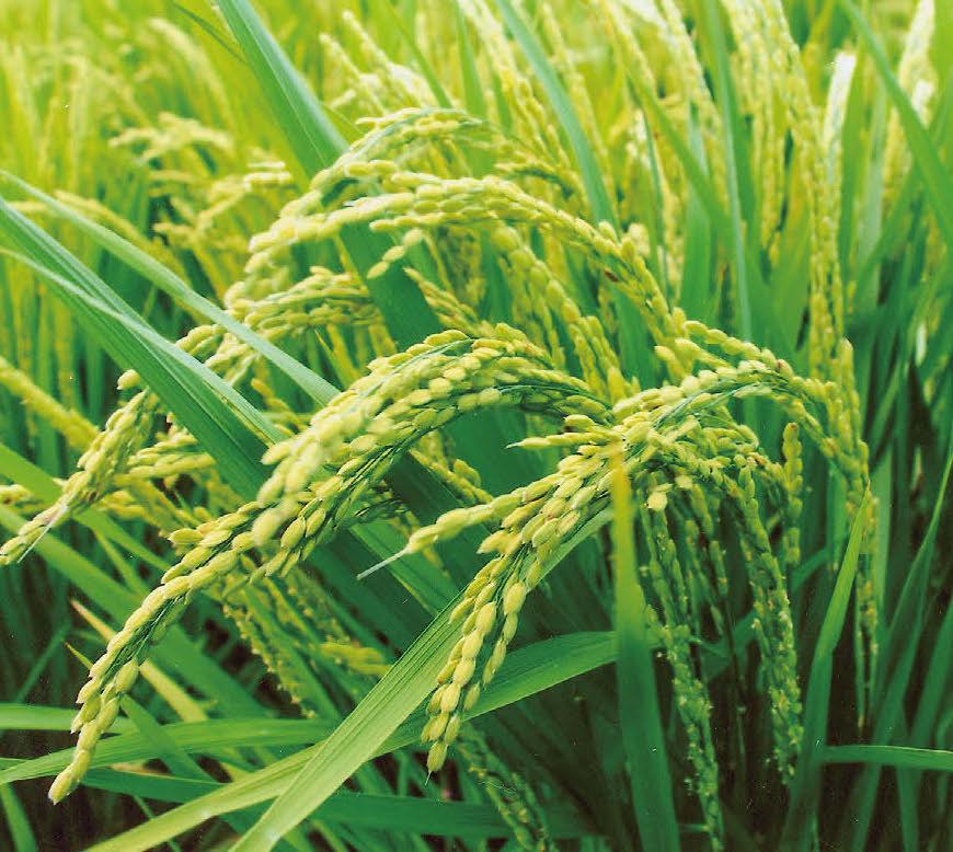 HB廣報,平成31年1月,フローラ,植物のちから,HB101,植物バイオ,