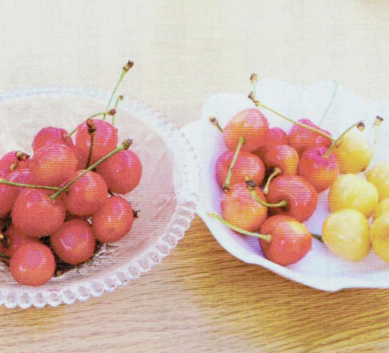 HB-101で栽培したサクランボは甘みと酸味のバランスが絶妙です。左の皿には佐藤錦、右の皿の左は紅秀峰で右は月山錦です。