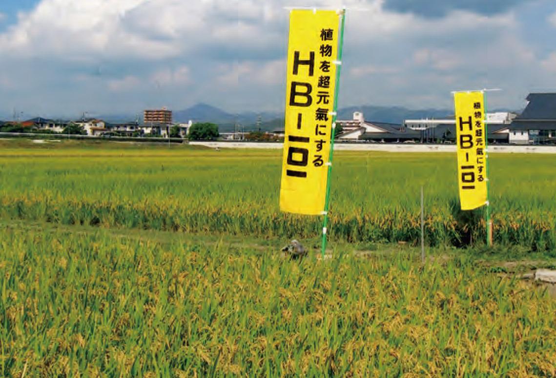 HB―101でお客様の評判の良いお米が出来ます。