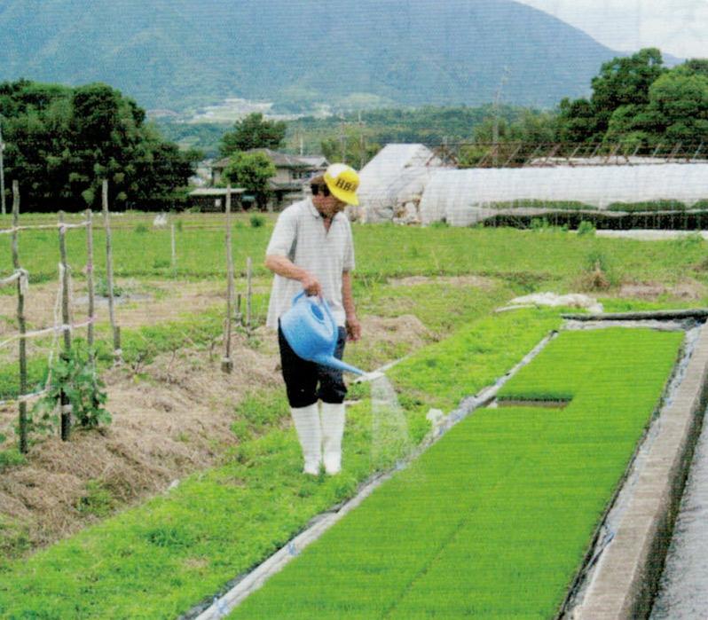 種籾をHB-101の千倍液に浸け、苗にHB-101の千倍液をジョロでかけ、本田でも3〜4回、HB-101を散布すると、最高のお米が出来ます。