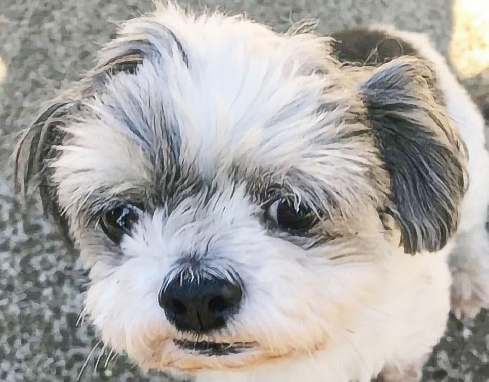 犬の飲み水にHB-101を入れて飲ませているので、9歳になる犬のハッピーは病気をせず、元気です。