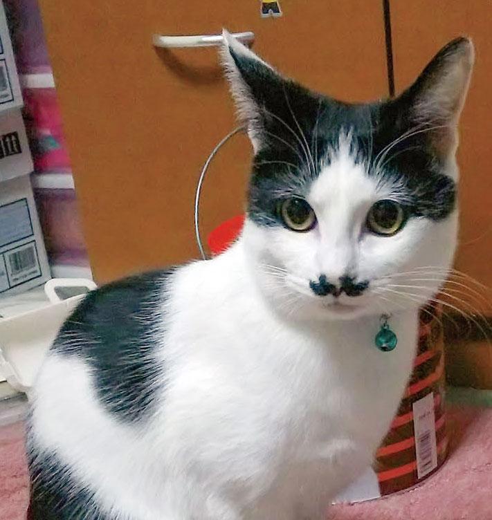 猫の「ふう」はHB-101入りの飲み水で、毛艶がとても良く、食欲も旺盛です。