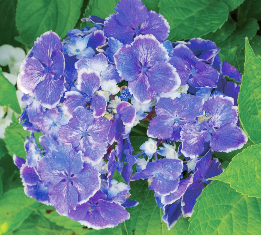 HB-101で見事な花を咲かせてくれています。