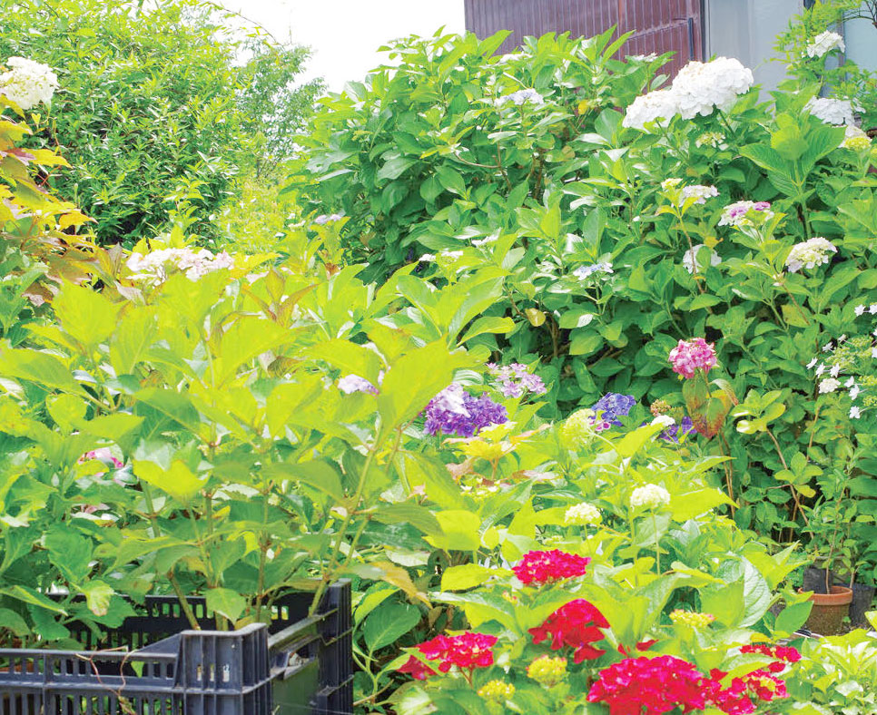 HB-101で美しい花が咲き、子どもがたくさんできます。
