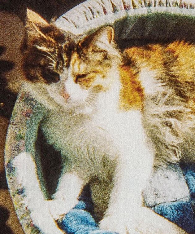 HB-101入りの水を飲んでいるので、メス猫のシューは元気です。