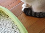 猫のトイレ|消臭剤