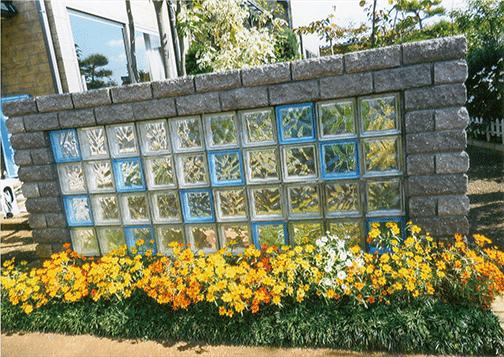 マリーゴールドの花がHB-101で満開です。