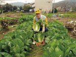 HB-101と顆粒HB-101のおかげで、実のしまった白菜と太い嬉野大根と日野菜とかぶが収穫できました。