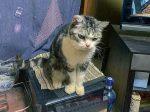 我が家の猫が腎臓を悪くしましたが、HB-101のおかげで元気になりました。