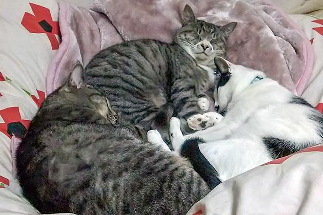 HB-101の入った飲み水を飲んでいるので、3匹の猫は毛艶がきれいで、食欲が良いです。