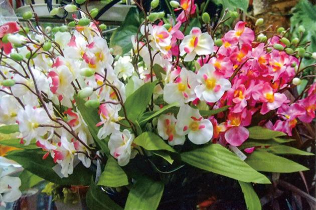 HB-101のおかげで、花が色鮮やかです。