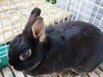 12才のウサギのマリアはHB―101で元気モリモリです。
